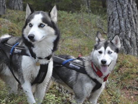 Misha og Jack rundt Finnholtsjøen.
