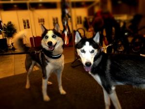 Jack og Bella
