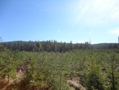 Hoggstfelt, nyplanta trær