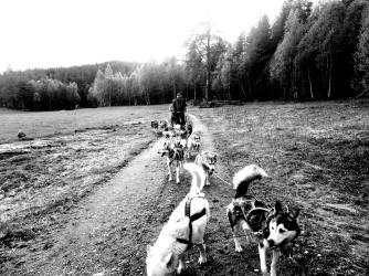 Trening Trollvogn, Misha i led på Alapmoen