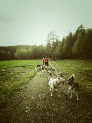 meg og hundene2_Fotor
