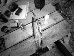 Fisken til Bent